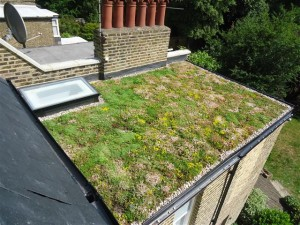 picture shows a recent contract for the installation of green roofing in altrincham
